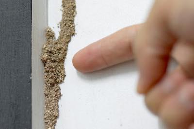 白アリ、害虫駆除のサービス